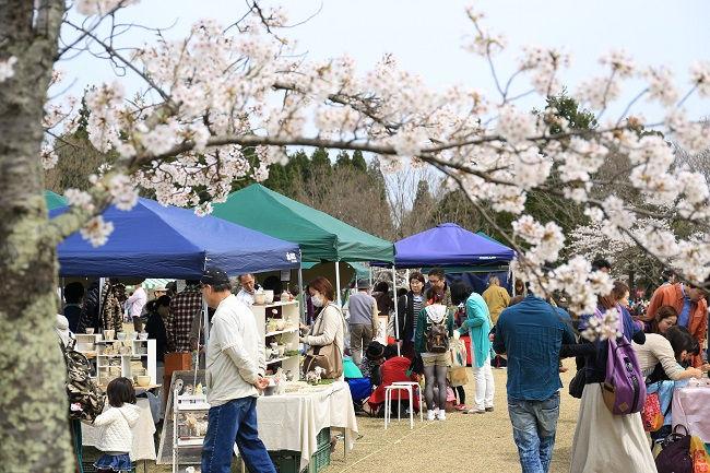 第8回越前陶芸村しだれ桜まつり ―BLOSSOM FES―