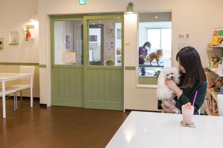 Dog Salon&Cafe chienka(シアンカ) メイン画像