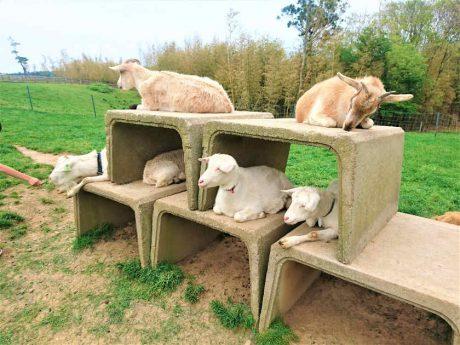 無料で動物たちとふれあい放題! 坂井市の「なかよし とんがり牧場」はユルくて最高。【動画あり】
