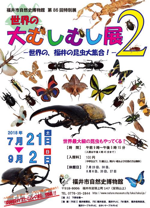 世界の大むしむし展2~世界の、福井の昆虫大集合!~