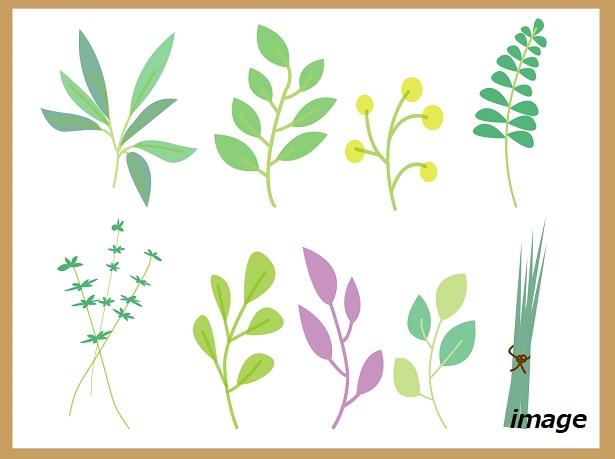緑の教室「植物標本の作り方と植物名の調べ方」