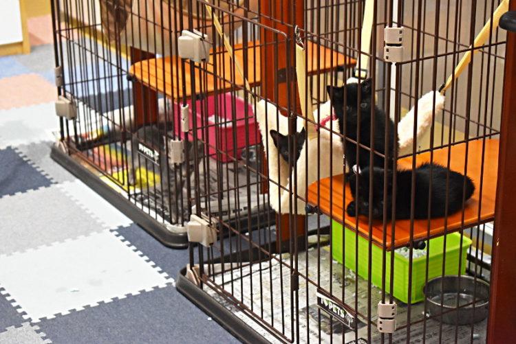 犬や猫を飼いたい人は「福井県動物管理指導センター」へ行ってみて!