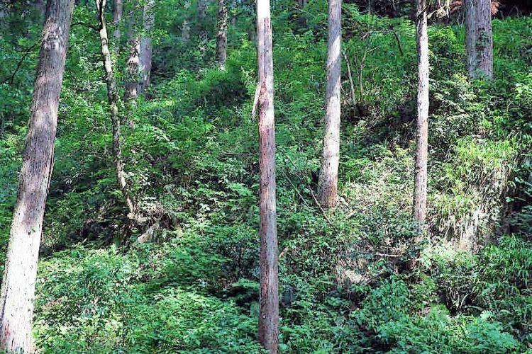 ある日、森の中、出会いは突然やってくる! 鯖江の山でアレと会った話。