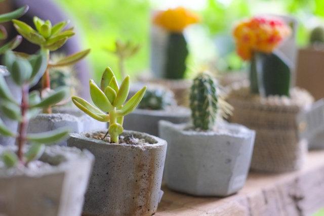 緑の教室「初めての多肉植物とサボテン」