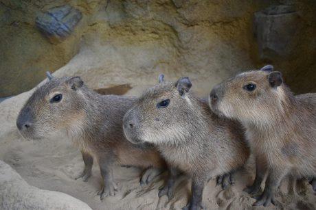 9月9日にオープン&イベント! 福井市の足羽山にできた、ふれあい動物舎「ハピジャン」をのぞいてきたよ。