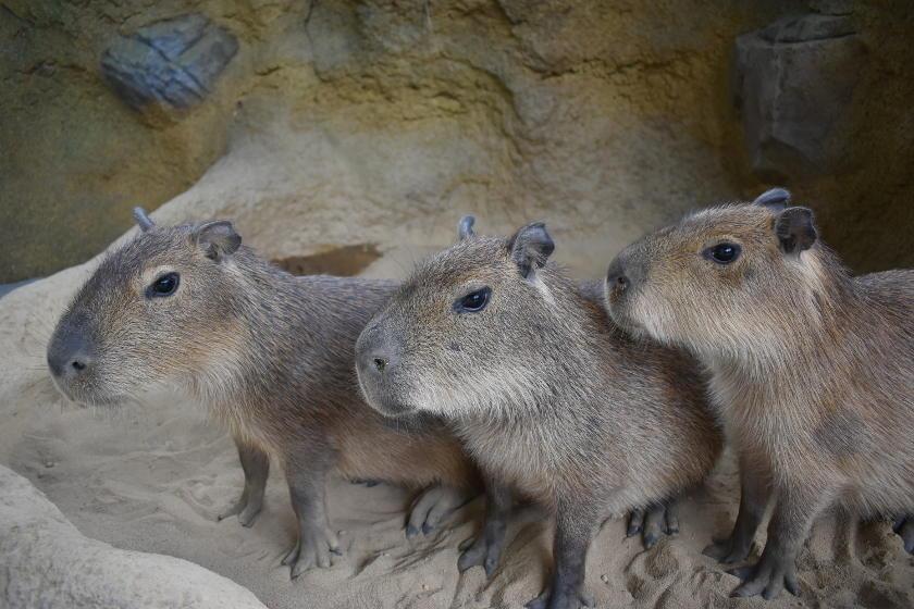 足羽山(福井市)の「ふれあい動物舎 ハピジャン」をご案内しちゃいますよ!