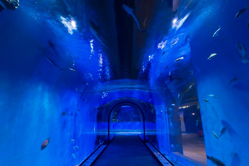 越前がにミュージアム・ビックラブ サブ画像