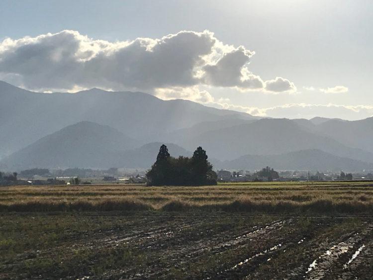 大野市の田んぼに、トトロを探しに行ってきた。