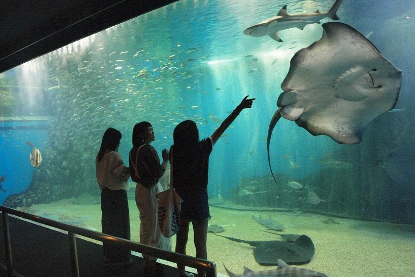 越前松島水族館 メイン画像