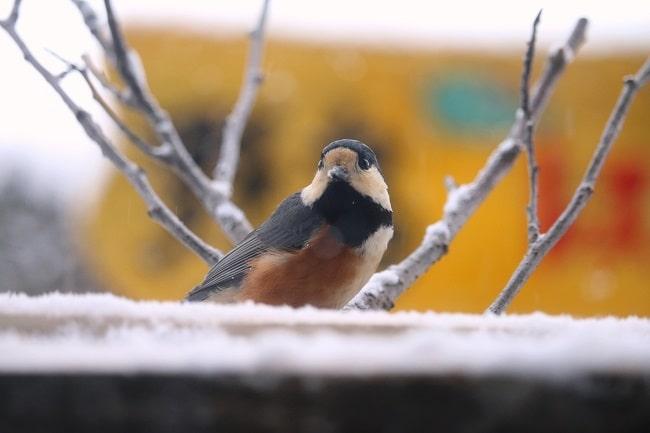 冬の野鳥レストラン