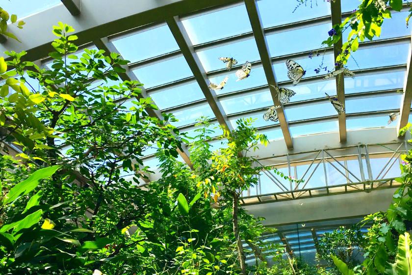 虫好き必見!「石川県ふれあい昆虫館」(石川県白山市)は子どもも大人も楽しく学べるスポットです!