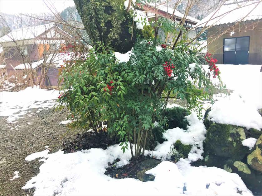朗報!? 今季の降雪量は控えめらしいことが判明。モズによれば【ヒトコマ】