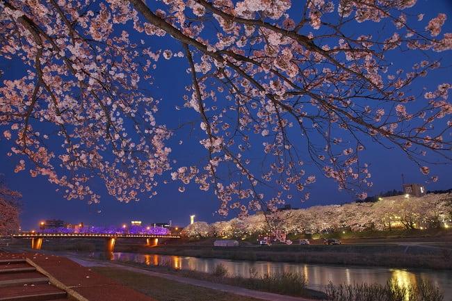 第34回ふくい桜まつり