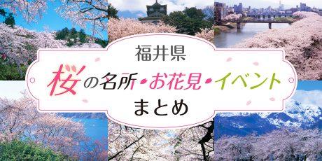 【2020年版】福井県の桜の名所・お花見・イベントまとめ【随時更新】