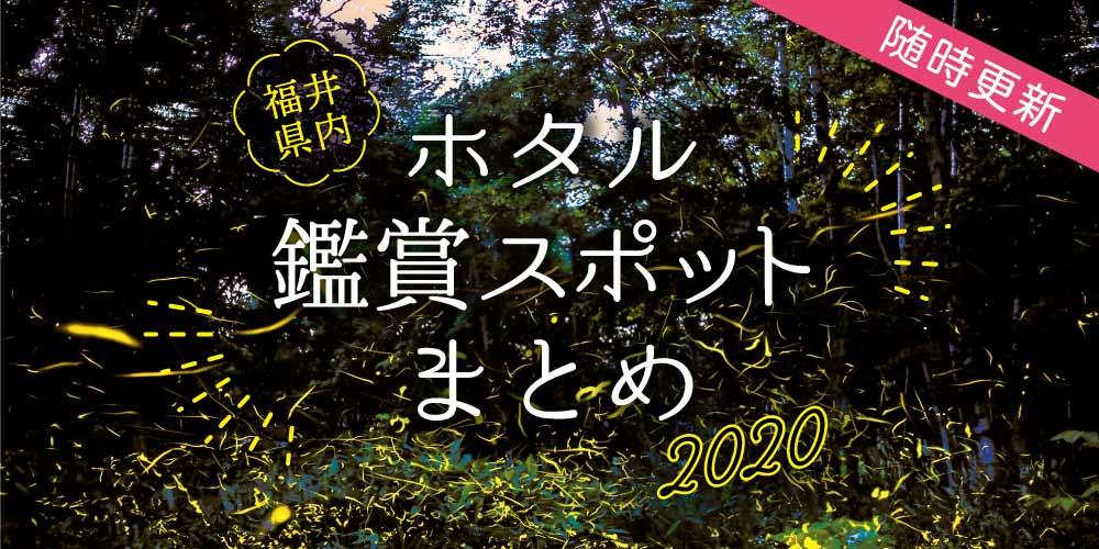 ここでホタルに会える! 2020年 福井県内のホタル鑑賞スポット情報【随時更新】