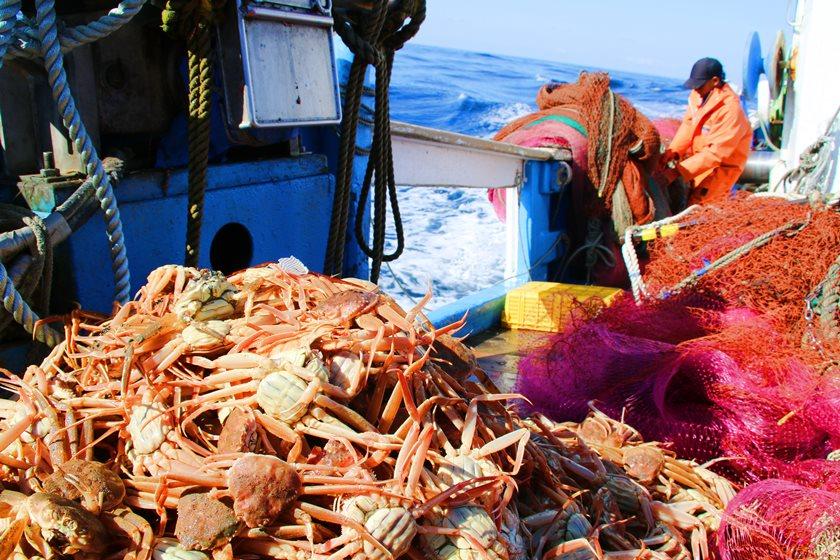 2019 福井「越前がに」の漁解禁を船上でスクープ!! ふーぽ編集部が漁師さんに密着取材してきたよ【動画あり】