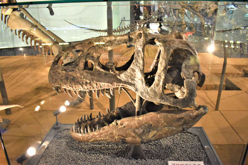 【2021年版】福井「恐竜博物館」を地元民が徹底ガイド! 最新おすすめ・見どころ・回り方・駐車場・レストラン・お土産まで。