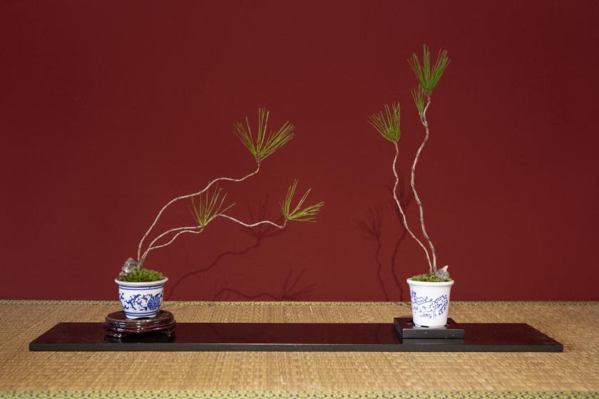 美意識が研ぎ澄まされる!福井県坂井市の「みくに園」でマイ盆栽をつくってみよう。