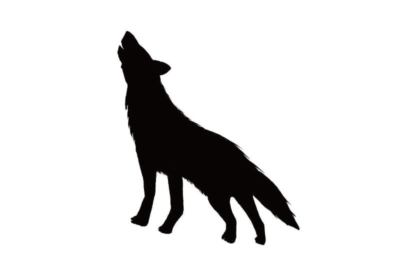 「〝福井オオカミ〞の真実とは?」/司書・歴史研究者 長野栄俊さん③【ふーぽコラム】