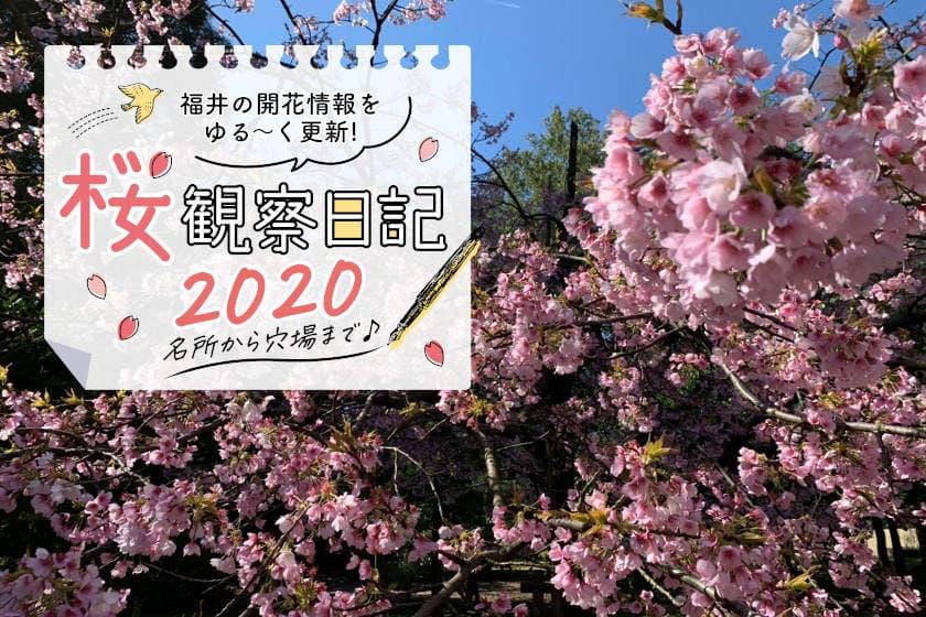 【2020年3月25日更新】福井県内各地の桜の開花状況をお伝えします!②~桜観察日記2020~