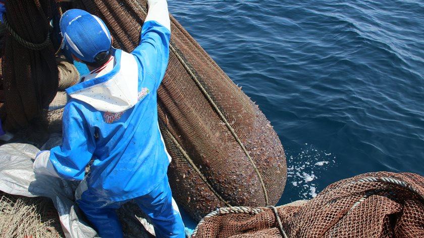 福井が誇る春の味覚「ホタルイカ」! ふーぽ編集部がまたまた漁師さんに同行取材してきたよ。【動画あり】