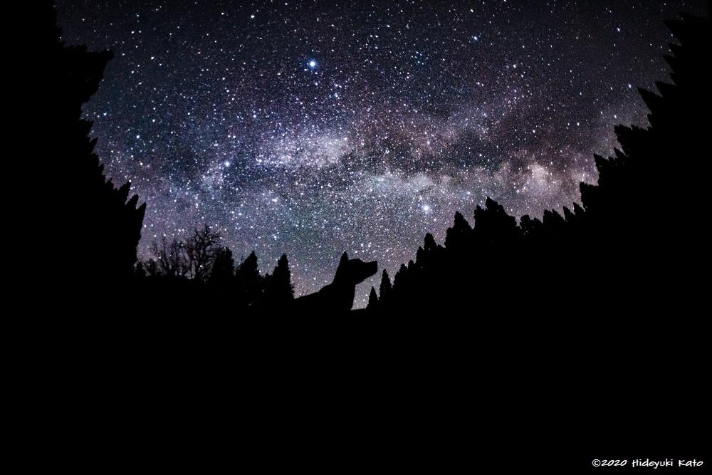 天の川を見上げる犬の影! 池田町の稗田の里公園で星を見てきました!【ふくい星空写真館】