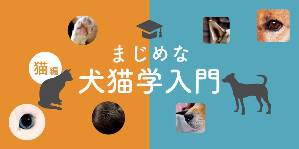 【猫編】知っておきたい、まじめな犬猫学入門。大切な家族ともっと仲良くなろう!