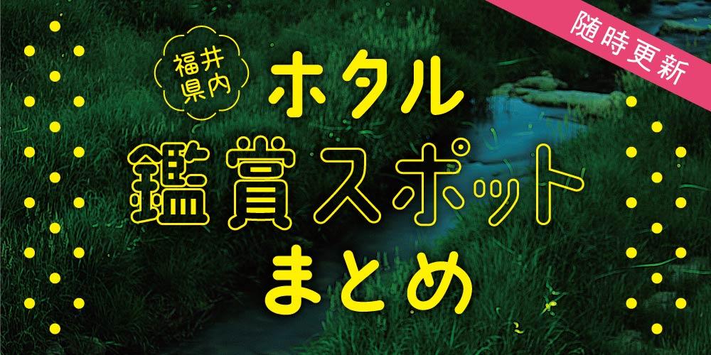 ここでホタルに会える! 福井県内のホタル鑑賞スポット情報2021【随時更新】