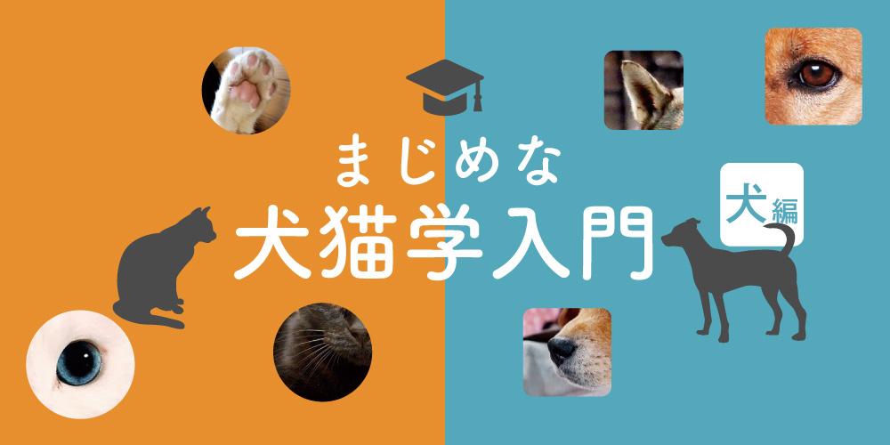【犬編】知っておきたい、まじめな犬猫学入門。大切な家族ともっと仲良くなろう!