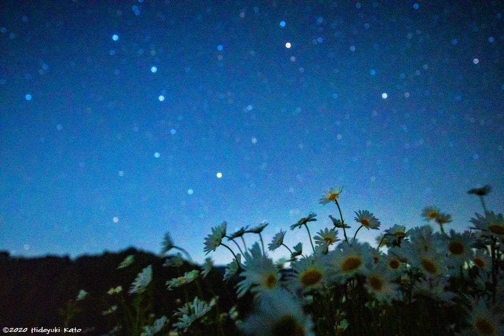 フランスギクと見上げる北斗七星! 勝山市の野向町で星を見てきました!【ふくい星空写真館】