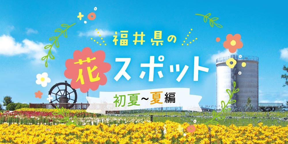 福井県の夏の花スポット11選。初夏~夏が見頃の花々を楽しもう♪【2020年版】