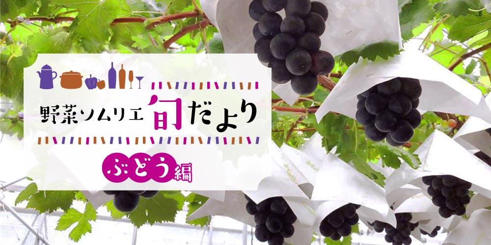 ぶどうの美味しい季節到来! ふくいの旬のぶどうを味わおう♪【野菜ソムリエ旬だより】