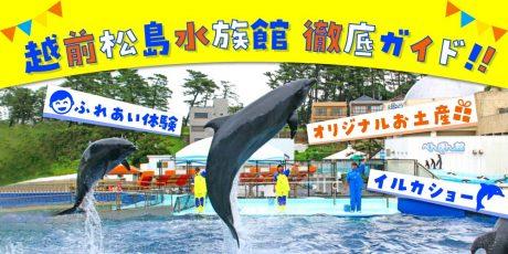 福井「越前松島水族館」の見どころを徹底ガイド♪ 迫力のイルカショーや、越前がに・サメのふれあい体験、話題のグルメまで深掘り!