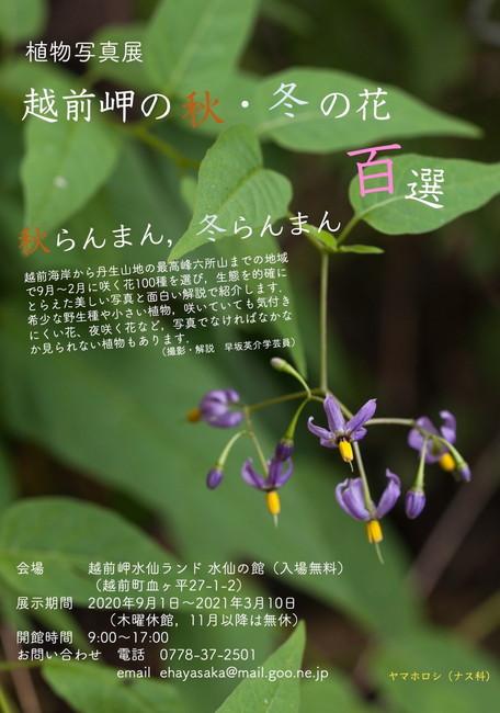 植物写真展「越前岬の秋・冬の花百選」