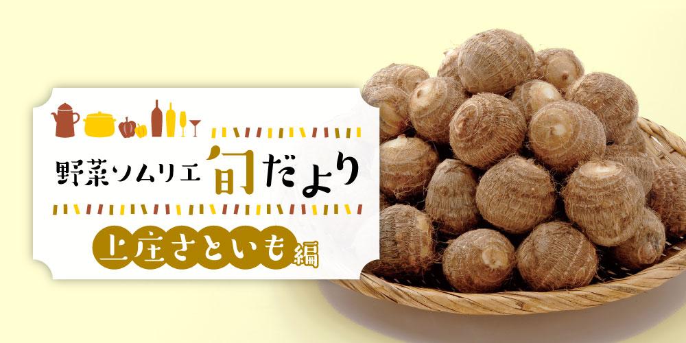 もちもち食感がたまらない♪ 福井のブランド野菜「上庄さといも」の魅力を紹介! 【野菜ソムリエ旬だより】