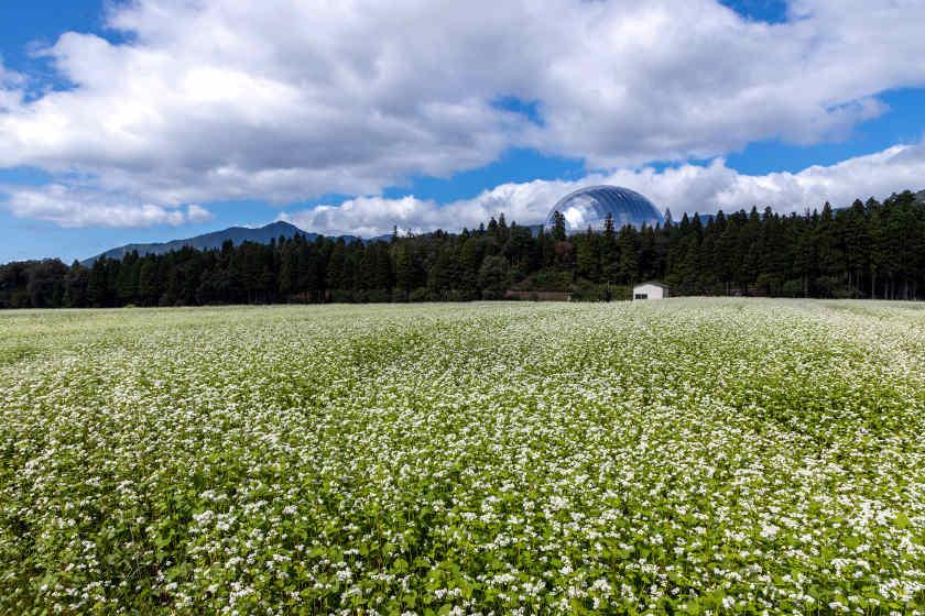 福井の在来種ソバ畑を訪ねて。「エコ・ファームてらお」(勝山市)で福井県産そば栽培への熱い思いを聞きました。【そばのうまれる風景】