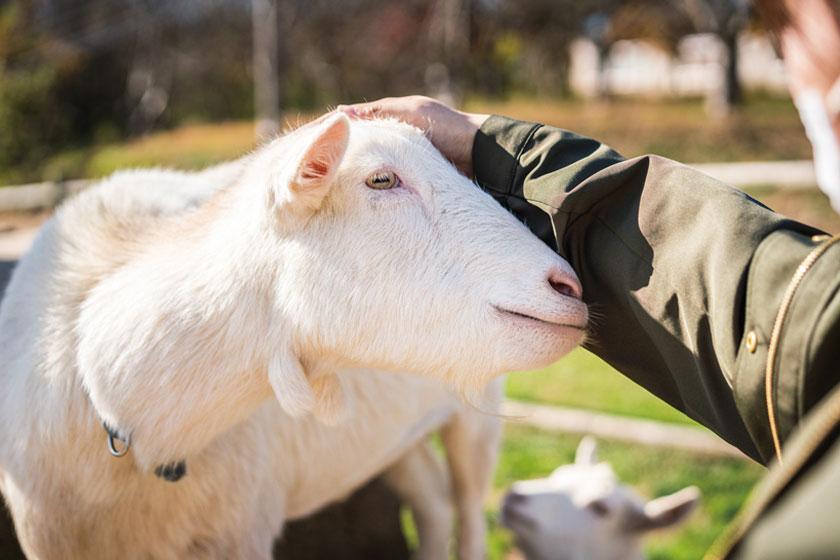 かわいい動物たちにほっこり♡ 見て、触れて、癒される福井のもふもふ動物スポット4選。