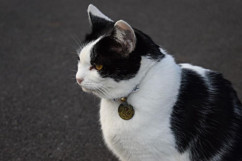 """""""猫寺""""で知られる越前市の御誕生寺。本堂前に鎮座する全長7mの大仏さまのお膝の上に、猫が2匹のってるよ。"""
