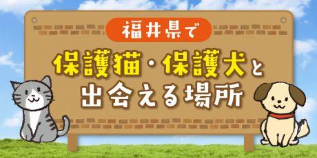 救える命はすぐそばに。福井県内で「保護猫・保護犬」と出会える場所まとめ。