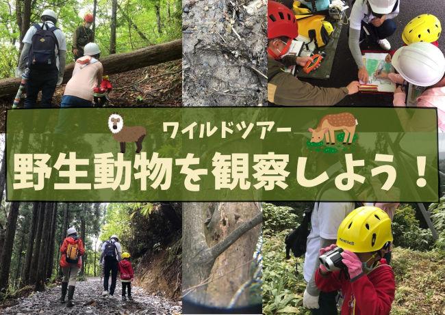 ワイルドツアー 野生動物を観察しよう!