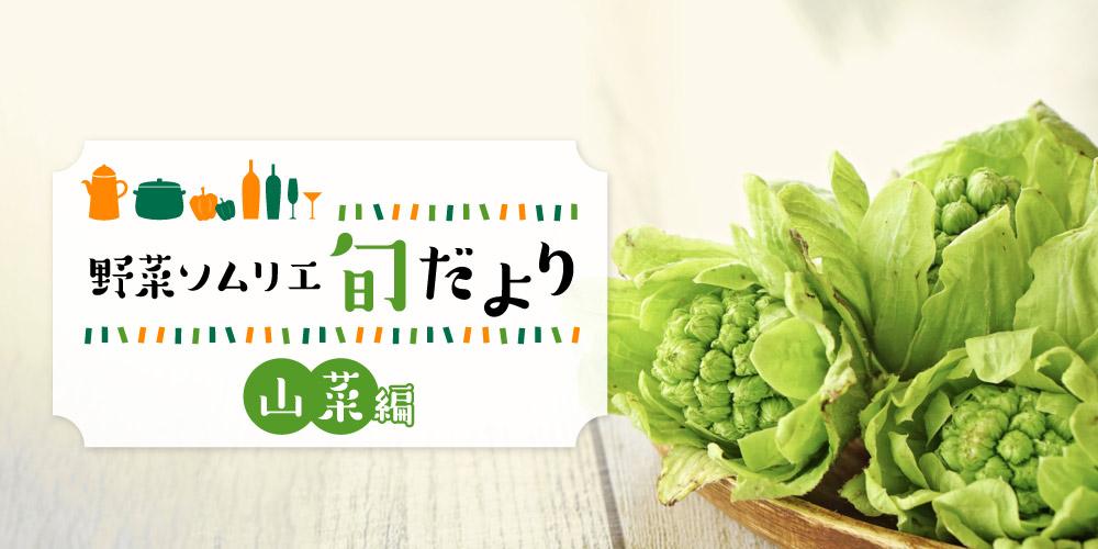春の味覚を楽しもう♪大地のごちそう「山菜」をご紹介! 【野菜ソムリエ旬だより】
