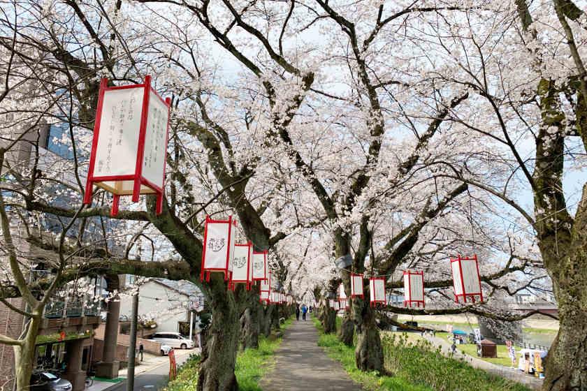 福井市で第36回ふくい桜まつり開催中! 桜並木のライトアップや人気アニメ「2.43」とのコラボイベントも楽しめるよ。【4/11(日)まで】