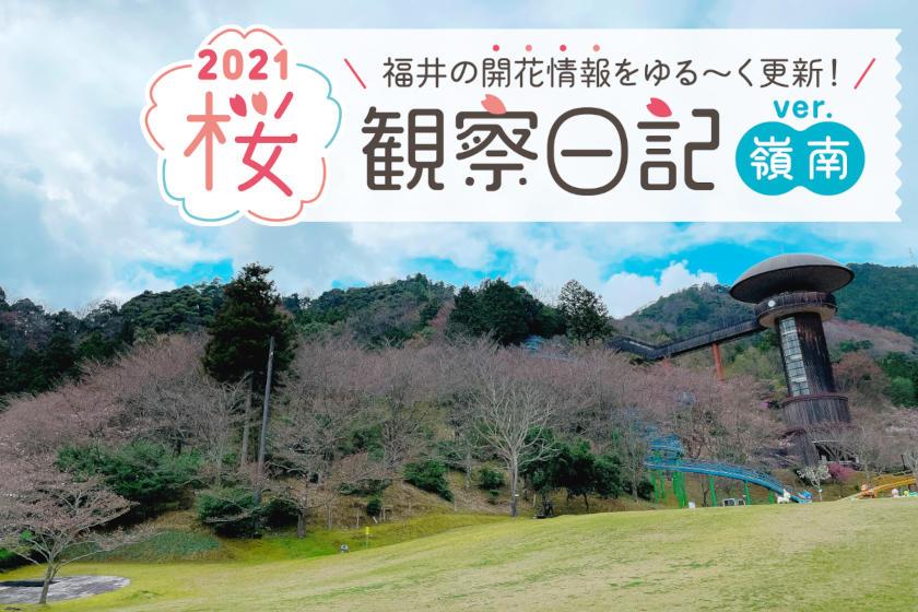 【2021年3月26日更新・嶺南編】福井県内各地の桜の開花状況をお伝えします! ②~桜観察日記2021~