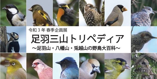 足羽三山トリペディア〜足羽山・八幡山・兎越山の野鳥大百科〜