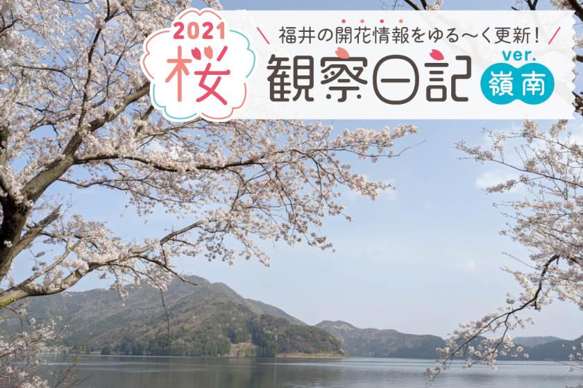 【2021年4月2日更新・嶺南編】福井県内各地の桜の開花状況をお伝えします! ④~桜観察日記2021~