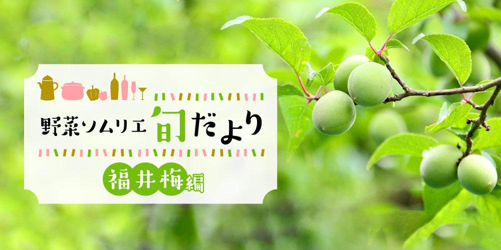 果肉たっぷり♪甘くフルーティーな香りも魅力の「福井梅」をご紹介! 【野菜ソムリエ旬だより】