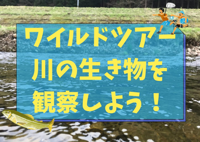 ワイルドツアー 川の生き物を観察しよう!