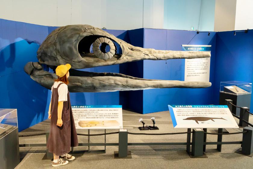 【~9/30まで休館延長】巨大海竜を体感せよ!! 県立恐竜博物館で10/31(日)まで開催中の「海竜ー恐竜時代の海の猛者たちー」が超オススメ。見どころから限定グッズまで紹介するよ。
